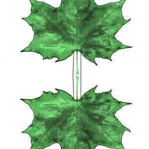 Printable paper maple leaf - dark green hues