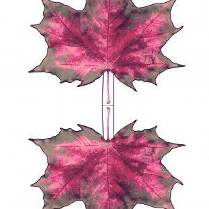 Printable paper maple leaf - pinky hues