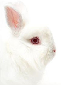 easter-bunny-rabbit