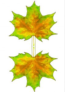 Natural coloured printable paper maple leaf