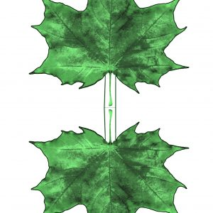 Printable paper maple leaf - dark green hues