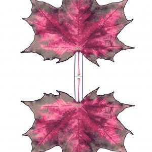 Printable paper maple leaf - pinky hues