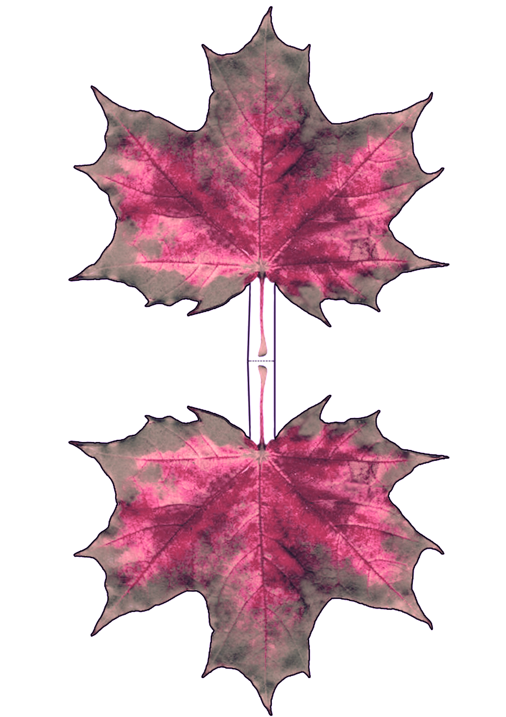Pinky Autumn Maple Leaf Decoration | Rooftop Post Printables