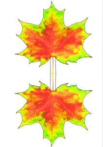 Printable red and yellow maple leaf