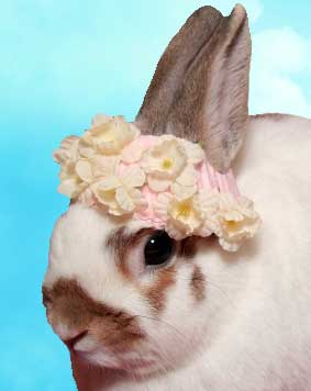 easter-bunny-in-a-bonnet