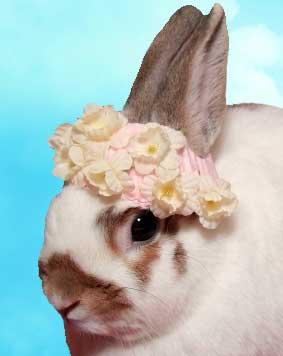 easter-bunny-in-a-bonnet