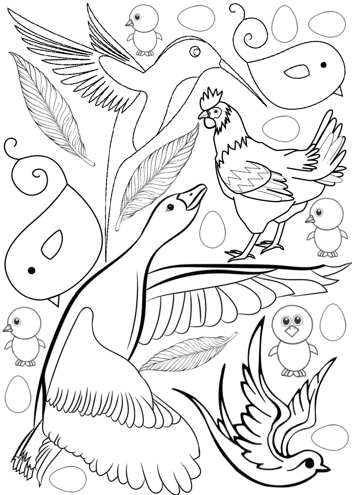 Printable colouring page of different types of bird