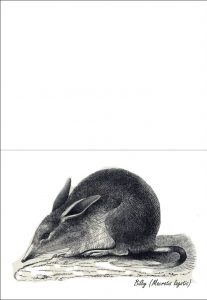 Greetings card showing a picture of a black and white sketch of a bilby.