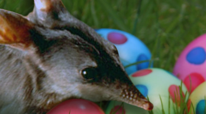Best of the Easter Bilby