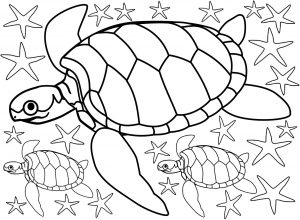 Colouring page of turtles and lots of starfish