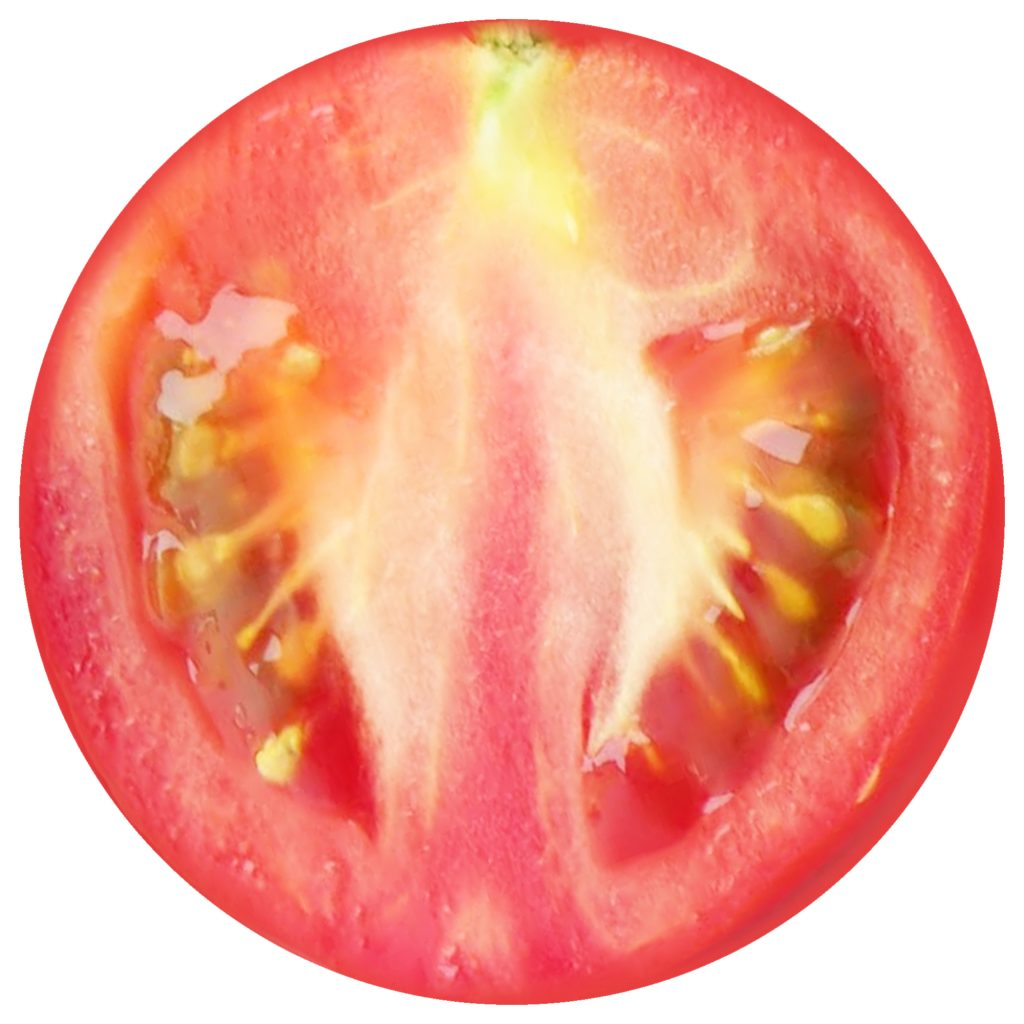 Printable tomato slice for making decorations for summer parties.