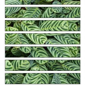 Printable paper chain strips with a tropical leaves design