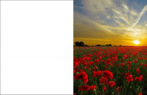 Poppies at Sunset Remembrance Card
